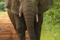 Elephant_1.jpg-2015-10-4-18-12-38