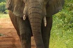 Elephant_1.jpg-2015-10-4-18-13-41