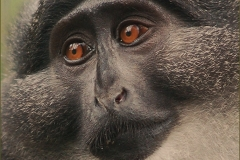 Preuss.jpg-2015-10-6-19-36-50