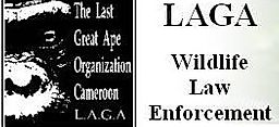 The Last Great Ape Organization Cameroon - LAGA