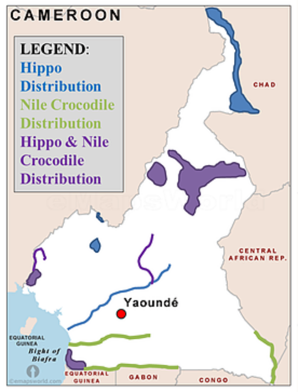 Legend hippo-crockodile-legend cameroon